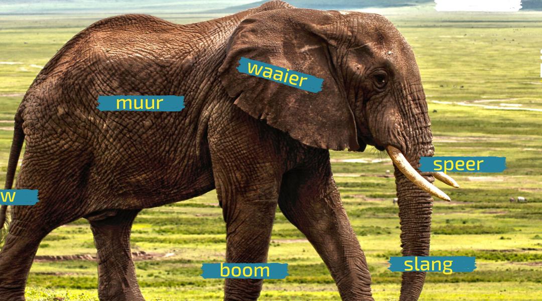 Zes blinden en één olifant…